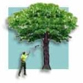 TreeHuggers Expert Tree Care